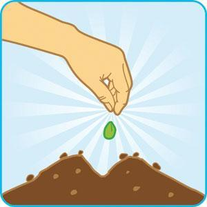 посадили огурцы