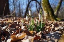 ранняя весна